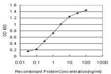 Anti-PSMD9 Mouse Monoclonal Antibody