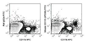 Anti-CSF1R Rat Monoclonal Antibody (FITC (Fluorescein)) [clone: AFS98]