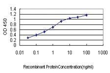 Anti-RAB38 Mouse Monoclonal Antibody