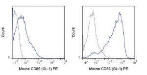 Anti-CD86 Rat Monoclonal Antibody (PE (Phycoerythrin)) [clone: GL-1]