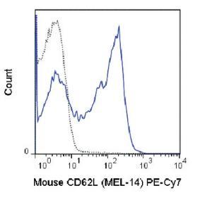 Anti-SELL Rat Monoclonal Antibody (PE (Phycoerythrin)/Cy7®) [clone: MEL-14]