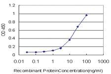 Anti-RBMS2 Mouse Monoclonal Antibody