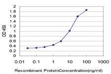 Anti-RND2 Mouse Monoclonal Antibody