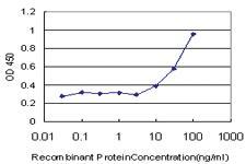 Anti-ROPN1 Mouse Monoclonal Antibody