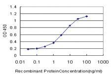 Anti-SEMA4B Mouse Monoclonal Antibody
