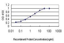Anti-SH3RF1 Mouse Monoclonal Antibody