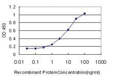Anti-SOX4 Mouse Monoclonal Antibody