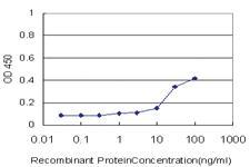 Anti-SPI1 Mouse Monoclonal Antibody