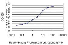 Anti-SYNGR2 Mouse Monoclonal Antibody