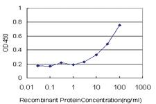 Anti-TRIM23 Mouse Monoclonal Antibody