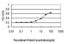 Anti-HECW2 Mouse Monoclonal Antibody