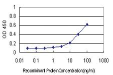 Anti-STIP1 Mouse Monoclonal Antibody