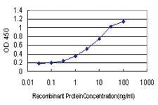 Anti-HOXA7 Mouse Monoclonal Antibody