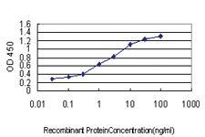 Anti-HOXC10 Mouse Monoclonal Antibody