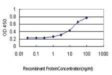 Anti-IGSF6 Mouse Monoclonal Antibody