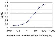 Anti-IL8 Mouse Monoclonal Antibody