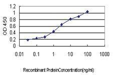 Anti-IRF1 Mouse Monoclonal Antibody