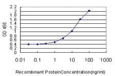 Anti-KCNMB3 Mouse Monoclonal Antibody