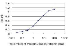 Anti-KLF9 Mouse Monoclonal Antibody