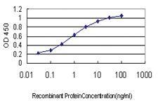 Anti-USP43 Mouse Monoclonal Antibody