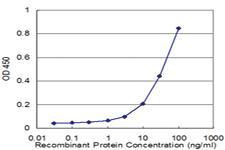 Anti-MPP1 Mouse Monoclonal Antibody