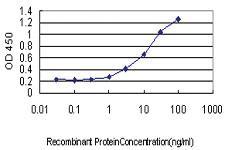 Anti-MPZ Mouse Monoclonal Antibody