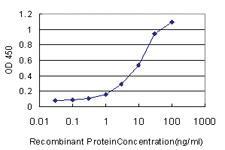 Anti-NISCH Mouse Monoclonal Antibody