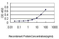 Anti-PARVG Mouse Monoclonal Antibody