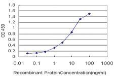 Anti-PCDH7 Mouse Monoclonal Antibody