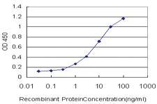Anti-PCDHB3 Mouse Monoclonal Antibody