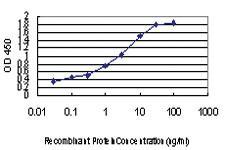 Anti-PLD2 Mouse Monoclonal Antibody