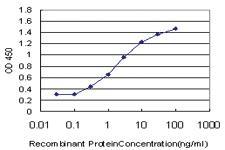 Anti-PLEKHG5 Mouse Monoclonal Antibody
